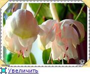 ФУКСИИ В ХАБАРОВСКЕ  - Страница 3 120d83a64c56t