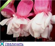 ФУКСИИ В ХАБАРОВСКЕ  - Страница 3 6281f839dbcbt