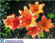 Лето в наших садах - Страница 5 4b71c3456df8t