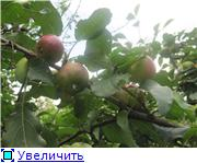 Яблоня: сорта и агротехника. 7d21b6968451t