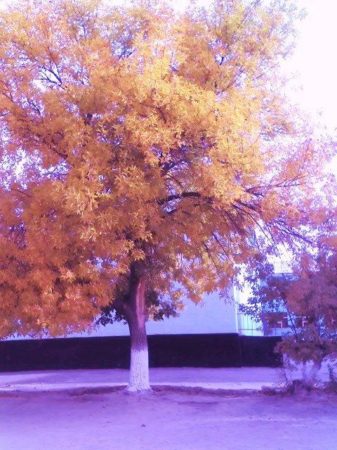 Золотая осень 0c6a3f2d3f77