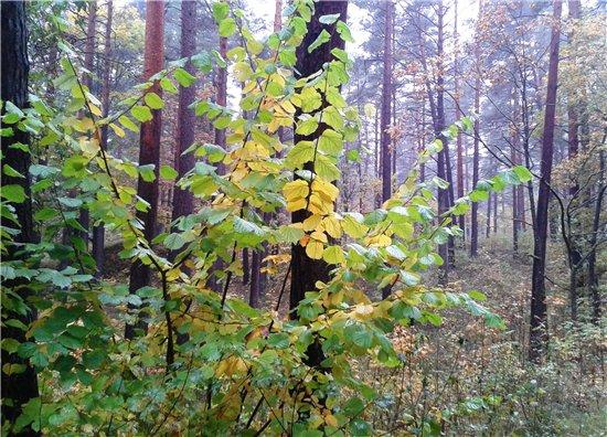 Осень, осень ... как ты хороша...( наше фотонастроение) - Страница 5 3c44379d324e