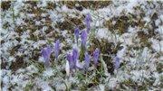 Весна идёт... - Страница 2 E3fe0ecbe259t