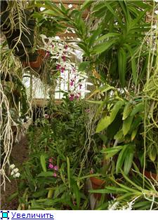 Размещение орхидей Daa1dfabf692t