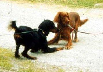 Диалог с собакой: сигналы примирения 0439795249a2