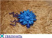 Астры и хризантемы 86288e065854t