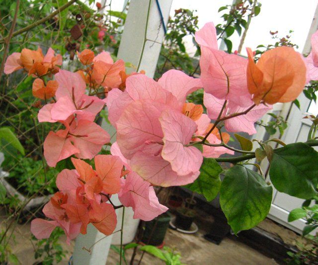 Растения из Нижегородской оранжереи 767ab49d7cdd