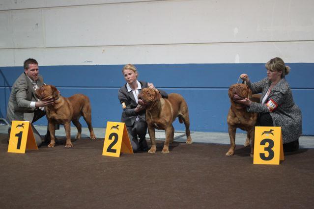 international dog show luxembourg  2e432d7fe8a5