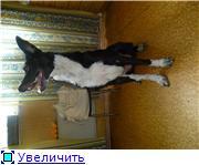 Чара - потрясающая собака! Ищет лучших хозяев! 50acb77d6d0ft