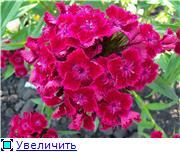 Лето в наших садах - Страница 5 Ca9b4c39aedat