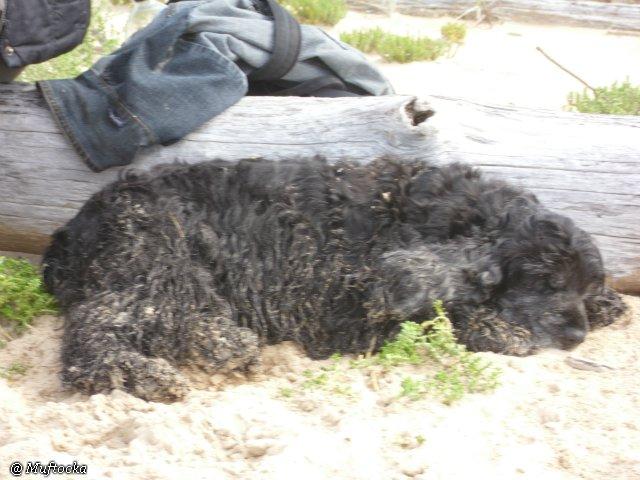 Наши собаки, друзья и гости, кот Мензурка A4594417a02c