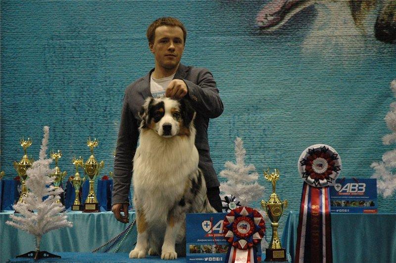 Выставочные успехи наших собак - 5 - Страница 30 83ff95074571