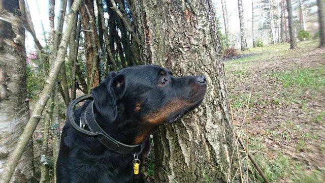 Наши собаки, друзья и гости, кот Мензурка - Страница 30 745e235becec