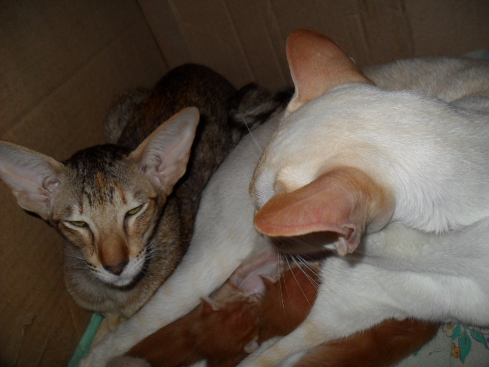 Домашние любимцы Кошки и Собаки - Страница 18 677445d34dd6