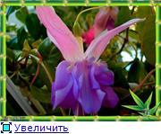 ФУКСИИ В ХАБАРОВСКЕ  114b179cec6at