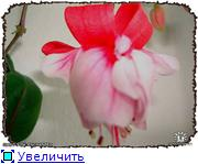ФУКСИИ В ХАБАРОВСКЕ  - Страница 3 89fcc1e71043t