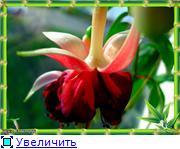 ФУКСИИ В ХАБАРОВСКЕ  - Страница 3 02addc4fa412t