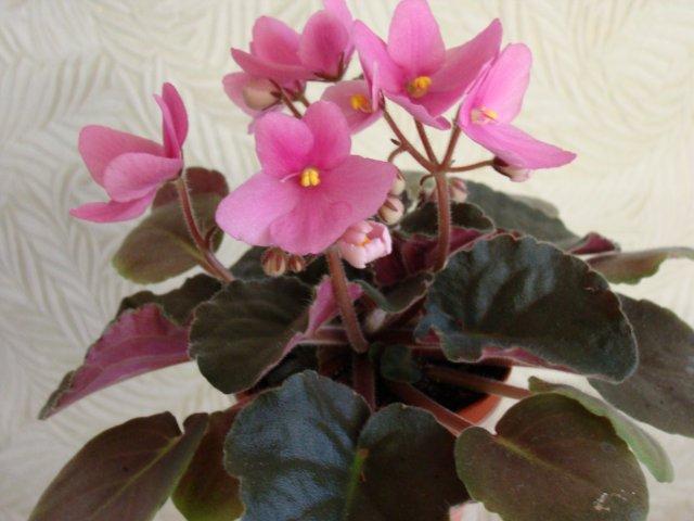 Мои цветочки - Страница 20 F0b304b9e16e