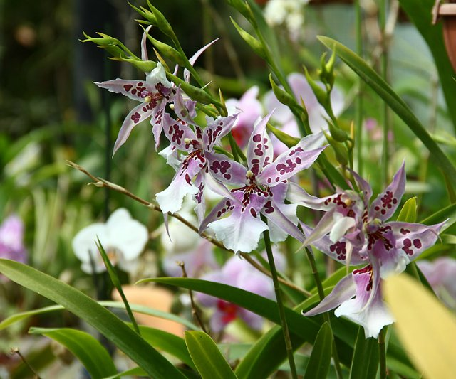 Экскурсия по Ботаническому Саду Df72ebba3833
