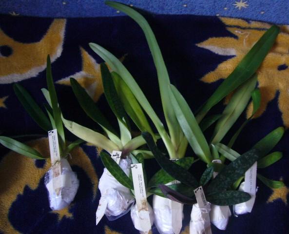 Обсуждение Орчидинна (Orchid Inn., USA) 6061e1c96e6e