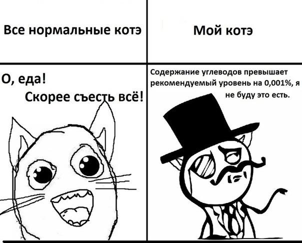 Прикольные истории о котах - Страница 3 009de695f01b