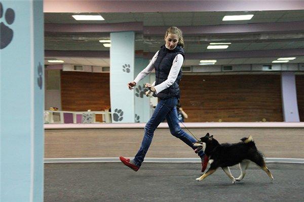 """ПРИГЛАШЕНИЕ НА ОТКРЫТИЕ Центра Спорта, Развлечений и Красоты для Собак   """"DOG AVENUE""""!!! - Страница 2 Adbb84433b28"""