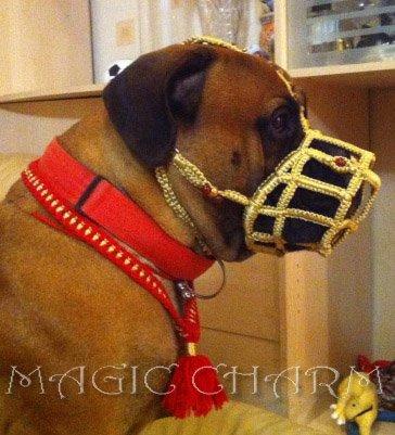 Magic Charm - ошейники, обереги, украшения и аксессуары для собак F3737f999f35