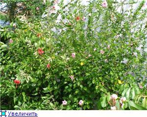 Орхидеи и прочая красота на о. Пхукет - Страница 2 C5327d102045t