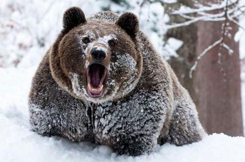 Ничто человеческое медведям не чуждо A69d0019ae7f