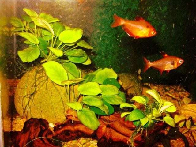 Первый аквариум - Страница 3 5144ce1c27db