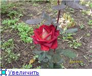 Specially for Karkela )))    Тестирование сербок и проч. 42c5ba237194t