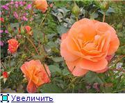 Specially for Karkela )))    Тестирование сербок и проч. 88381eaf7d45t