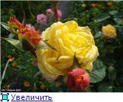 Розы 2011 863012fcd392t