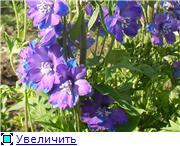 Лето в наших садах - Страница 4 Ebff14100810t