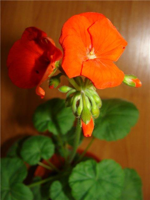 Весеннее  цветение (Хваст от Веры) - Страница 8 84f1ddac4470