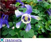 Растения для альпийской горки. - Страница 2 3d076ca6b4f1t