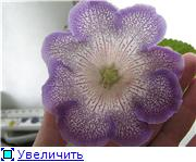 Семена глоксиний и стрептокарпусов почтой - Страница 8 Be24c84f1f28t