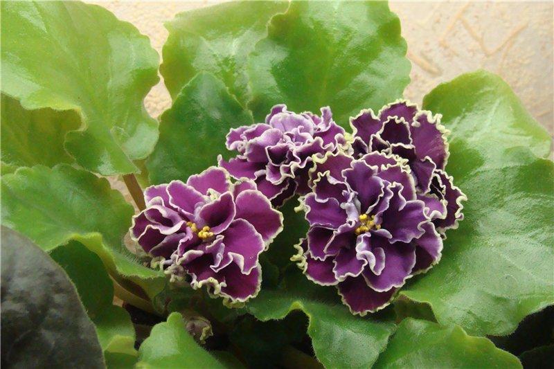 Весеннее  цветение (Хваст от Веры) - Страница 9 055989bece98