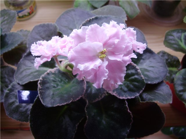 Розовая Акварель (Морев) 4378d5d8dd15