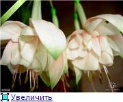 ФУКСИИ В ХАБАРОВСКЕ  - Страница 3 9001d00a7712t