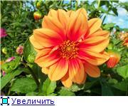 Георгины в цвету - Страница 2 C7ad39cc7c67t
