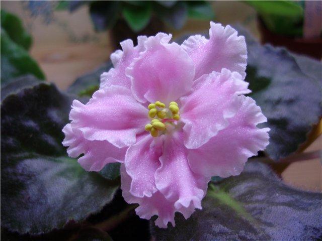 Розовая Акварель (Морев) 47d77259ba51