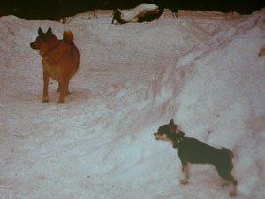 Диалог с собакой: сигналы примирения 3de714c2ba43