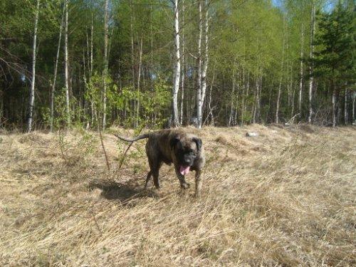 Наши собаки, друзья и гости, кот Мензурка Ed748544b944