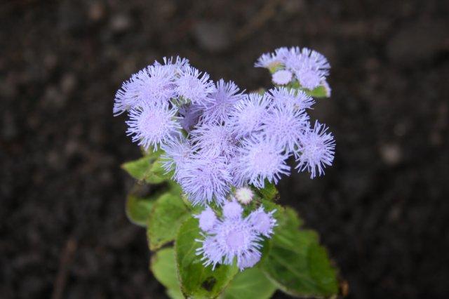 Растения от FILIGERa - Страница 2 345cd8e6326f