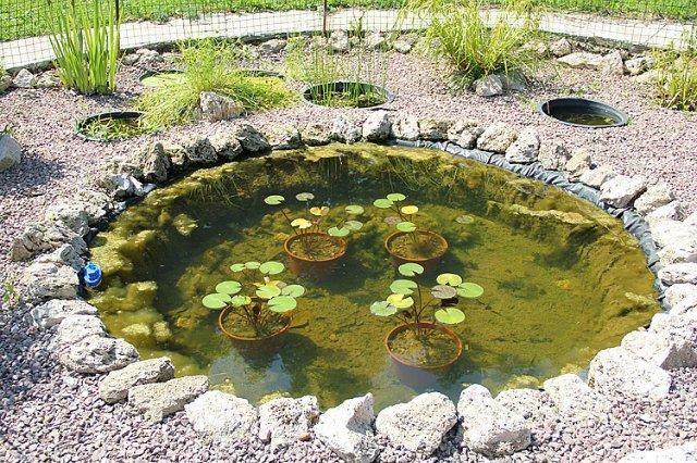 Экскурсия по Ботаническому Саду Cbe011412f2b