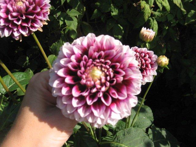 Во саду ли, в огороде... - Страница 6 F01ffe08ba11