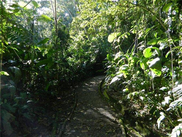 Costa Rica. Центральная Америка. - Страница 17 6c9d7738c184