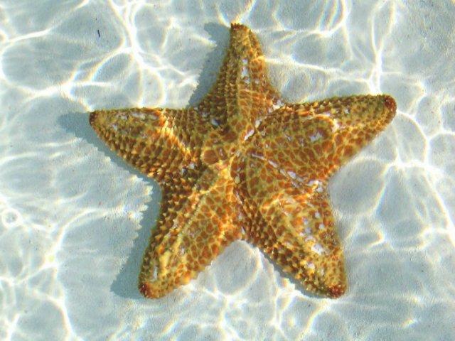 Морская звезда 92a22e0631ff