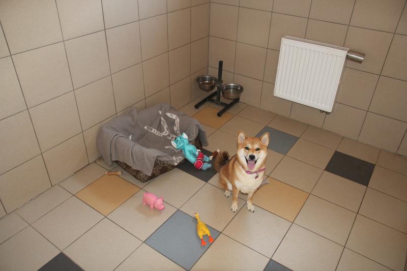 Семейная гостиница для собак в Дедовске (передержка) 69115fd6de90